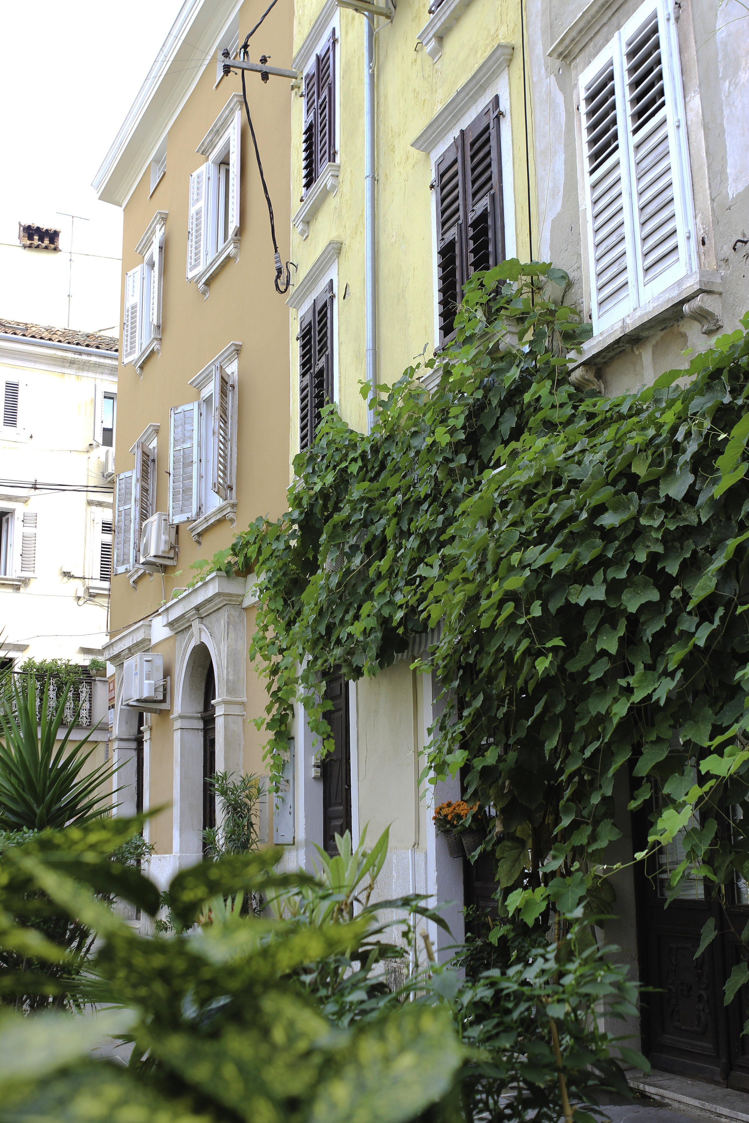 Amidst the narrow streets, lush plants hang from each window and doorway.