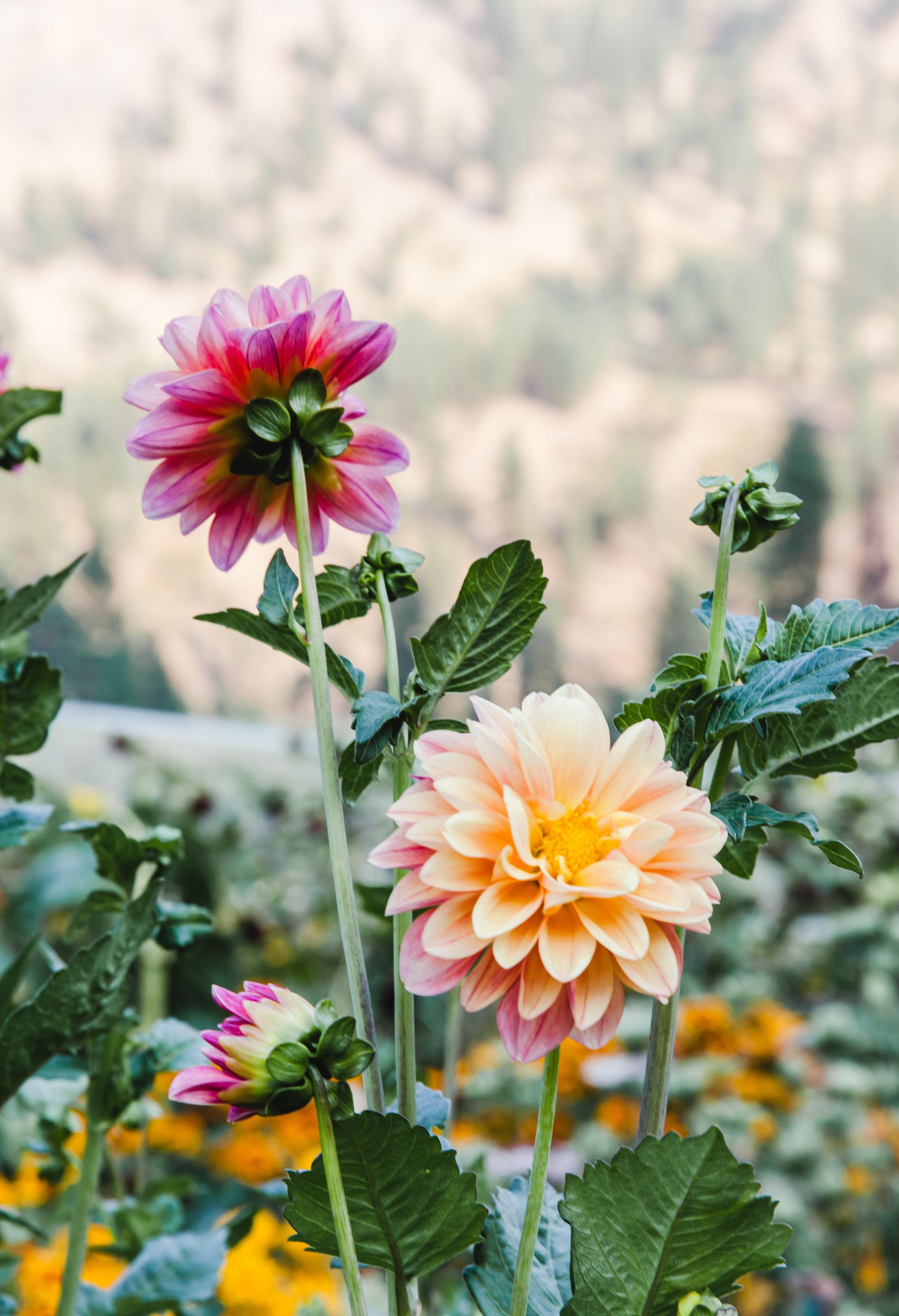 flowers (33 of 274).jpg