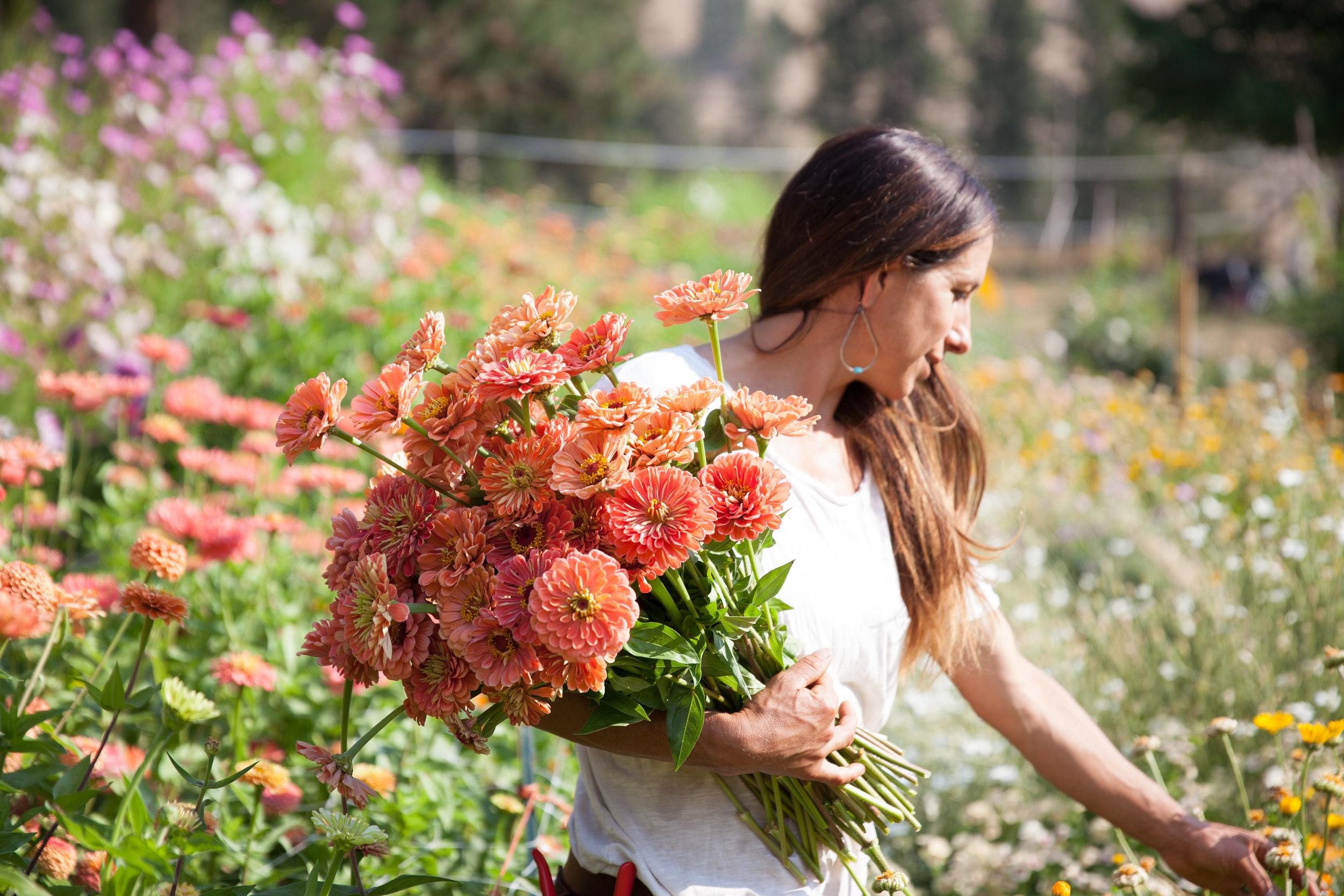 flowers (64 of 274).jpg