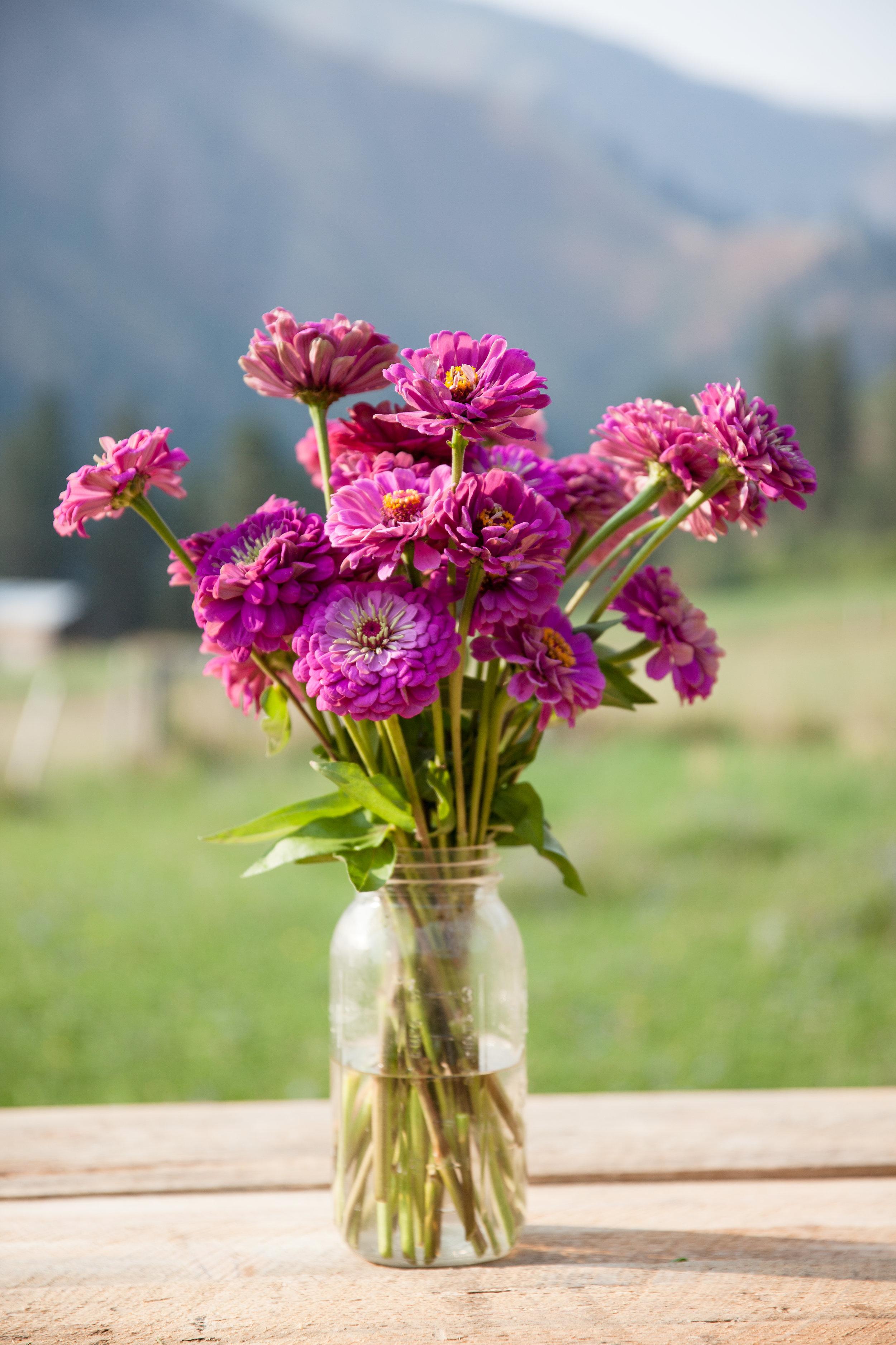 flowers (188 of 274).jpg