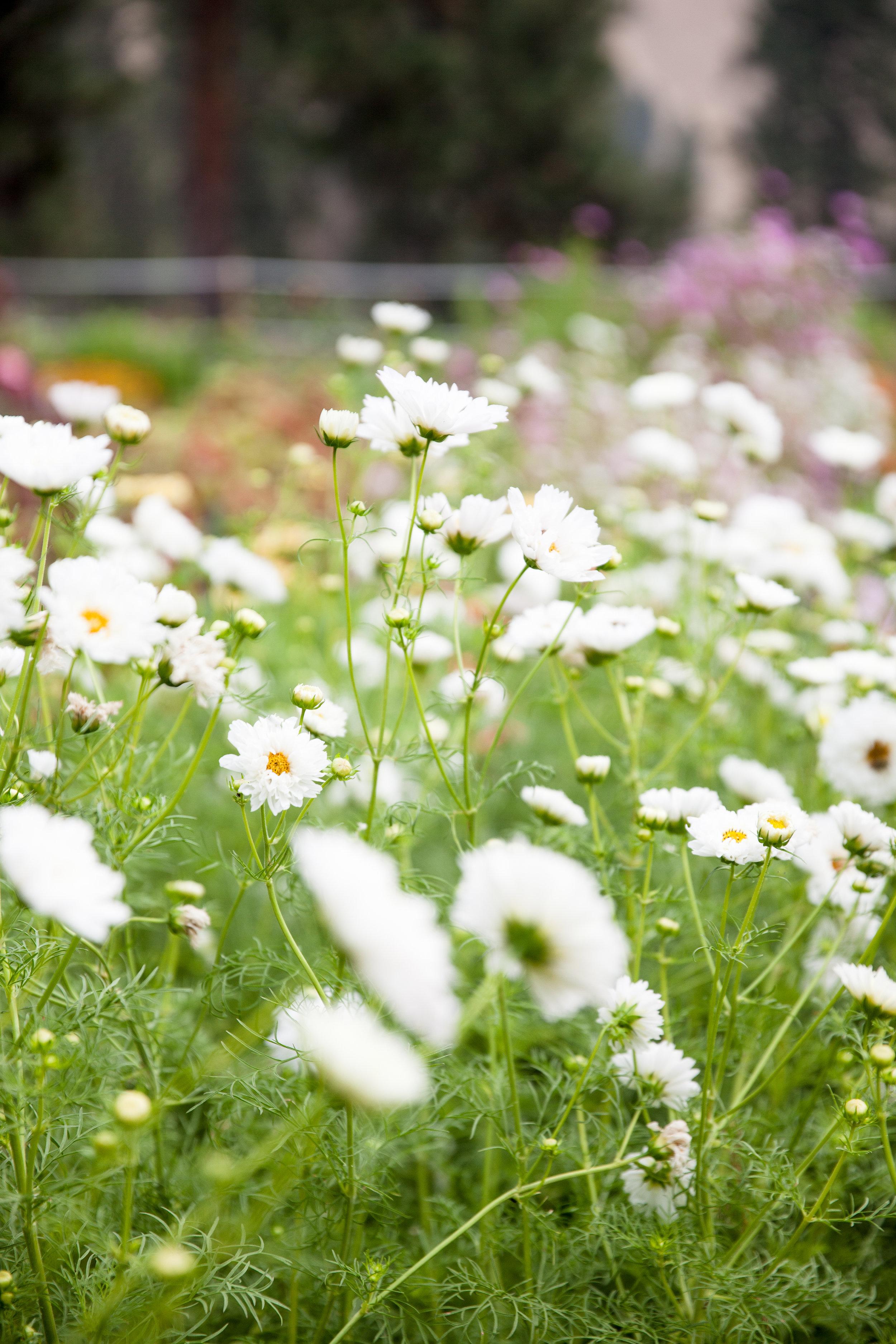 flowers (102 of 274).jpg