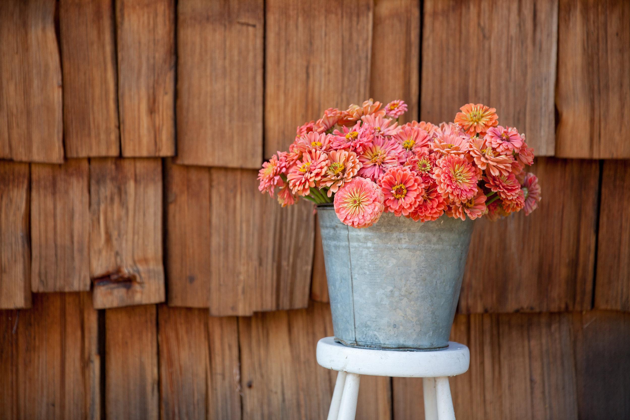 flowers (198 of 274).jpg