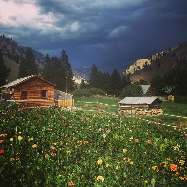 When you're head down and ass up in the dahlias and a storm rolls in... #makesyoufeelsmalldoesntit . . . #salmonriver #flowerfarming #flowerfarmer #farmerflorist #weddingflowers #backcountry #mccall #idaholiving #idahome #idahoflowers #dahlias #thunderstorms #countrylivin #idahoweddingflowers