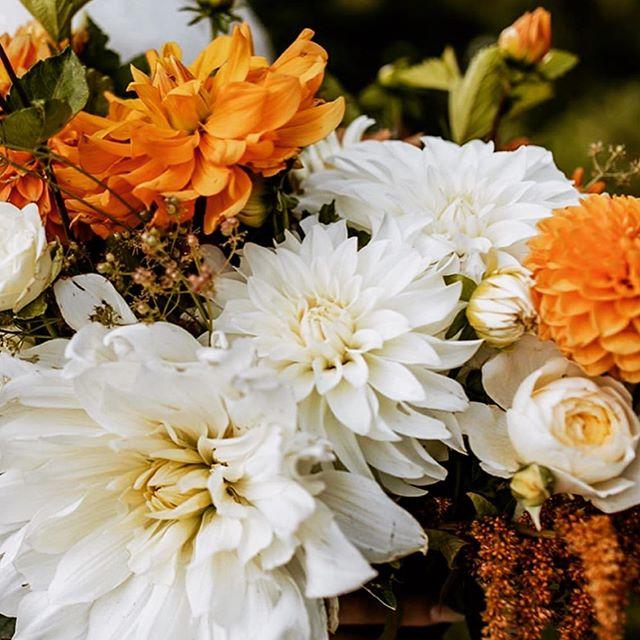 I was out doing a garden inventory this morning... somehow the dahlias are we're not harmed by the light frost we had! #stillinbusiness . . . 📷 @katelynbarthlomephotography . . . #flowerfarmer #flowerfarming #bridalbouquet #bouquetinspo #localflowers #dahlias #flowersofinstagram #boiseweddings #idahoweddings #adventureweddings #idahome #backcountry #salmonriver #southfork