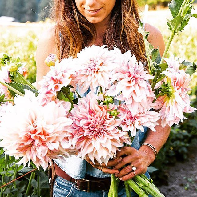 Well, it's official. Dahlias are frosted.... #endoftheseason . . . 📷 @cimbalik.photography . . . #flowerfarmer #flowerfarming #farmerflorist #dahlias #cafeaulaitdahlia #mccallidaho #idahome #salmonriver #riverofnoreturn #backcountry #weddingflowers #idahoweddings #weddingflorist #idahoflorist #mccallflorist #bouquetinspo #weddingbouquet #localflowers #slowflowers #knowyourfarmer