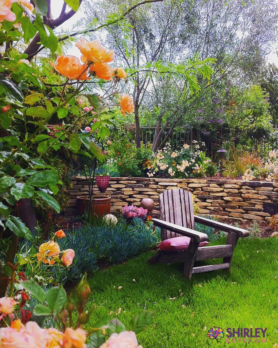shirley-rose-garden.jpg