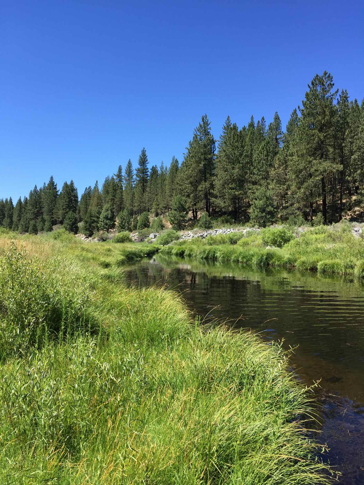 Feather River in Plumas County.