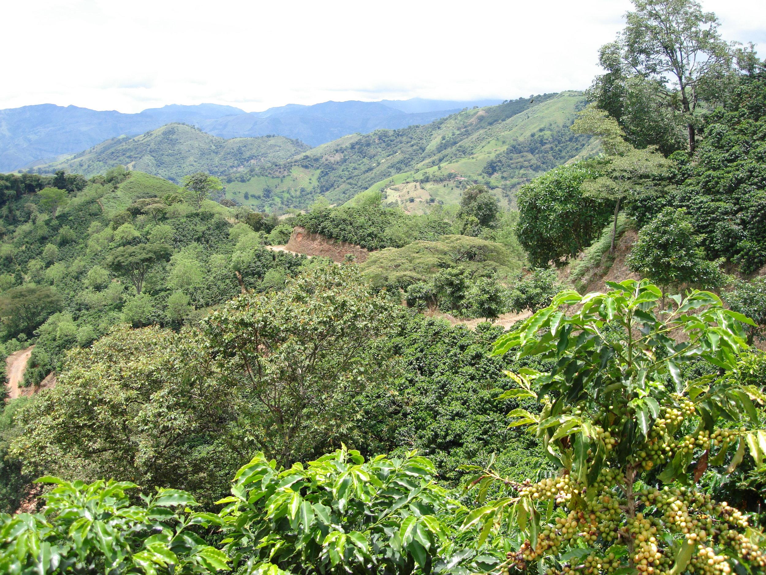 coffee_plantation_colombia-627.jpg