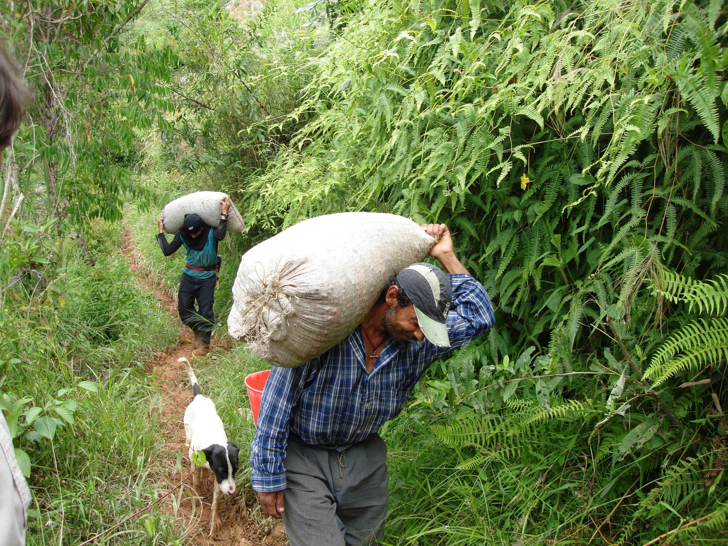 coffee_plantation_colombia-675.jpg