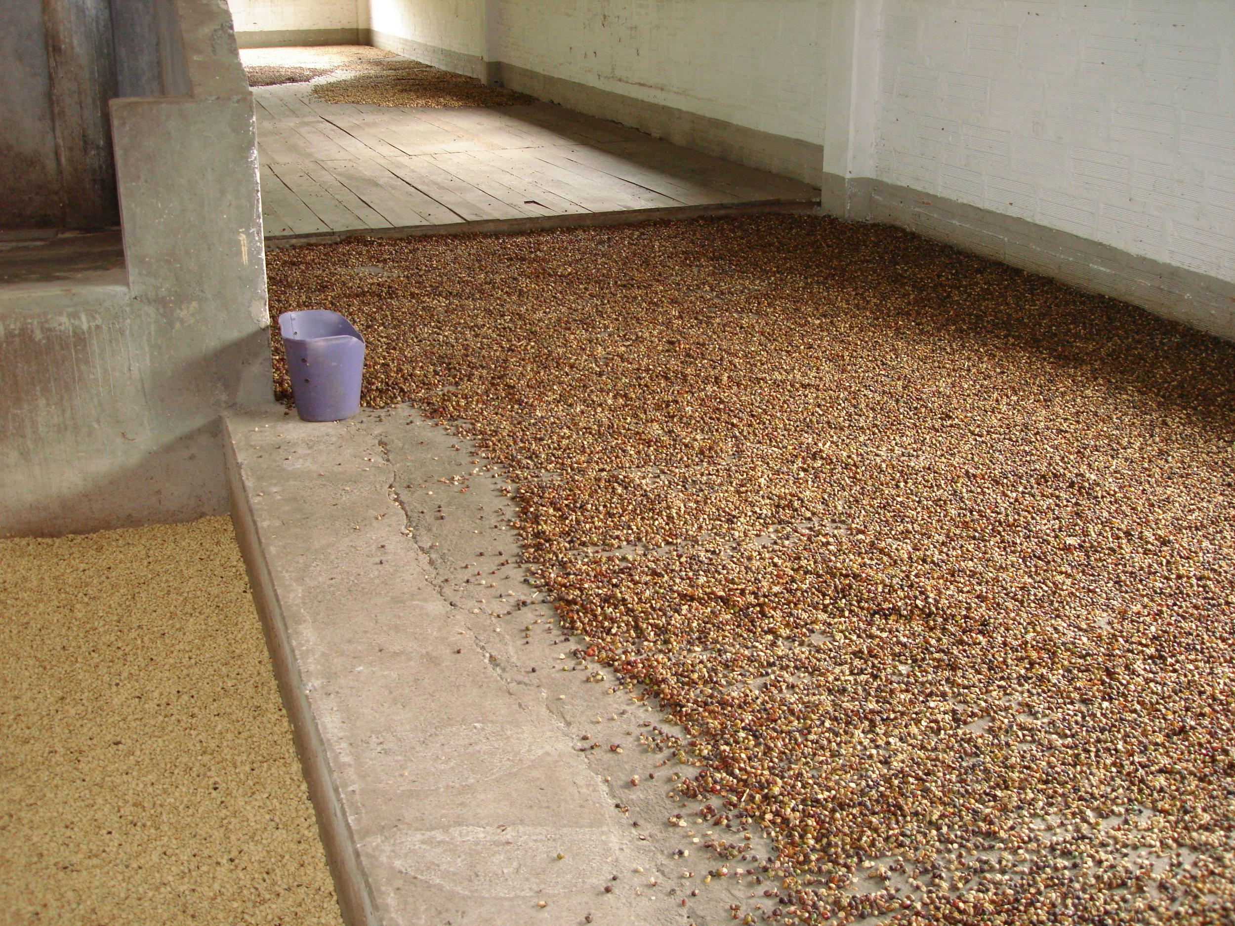 coffee_plantation_colombia-729.jpg