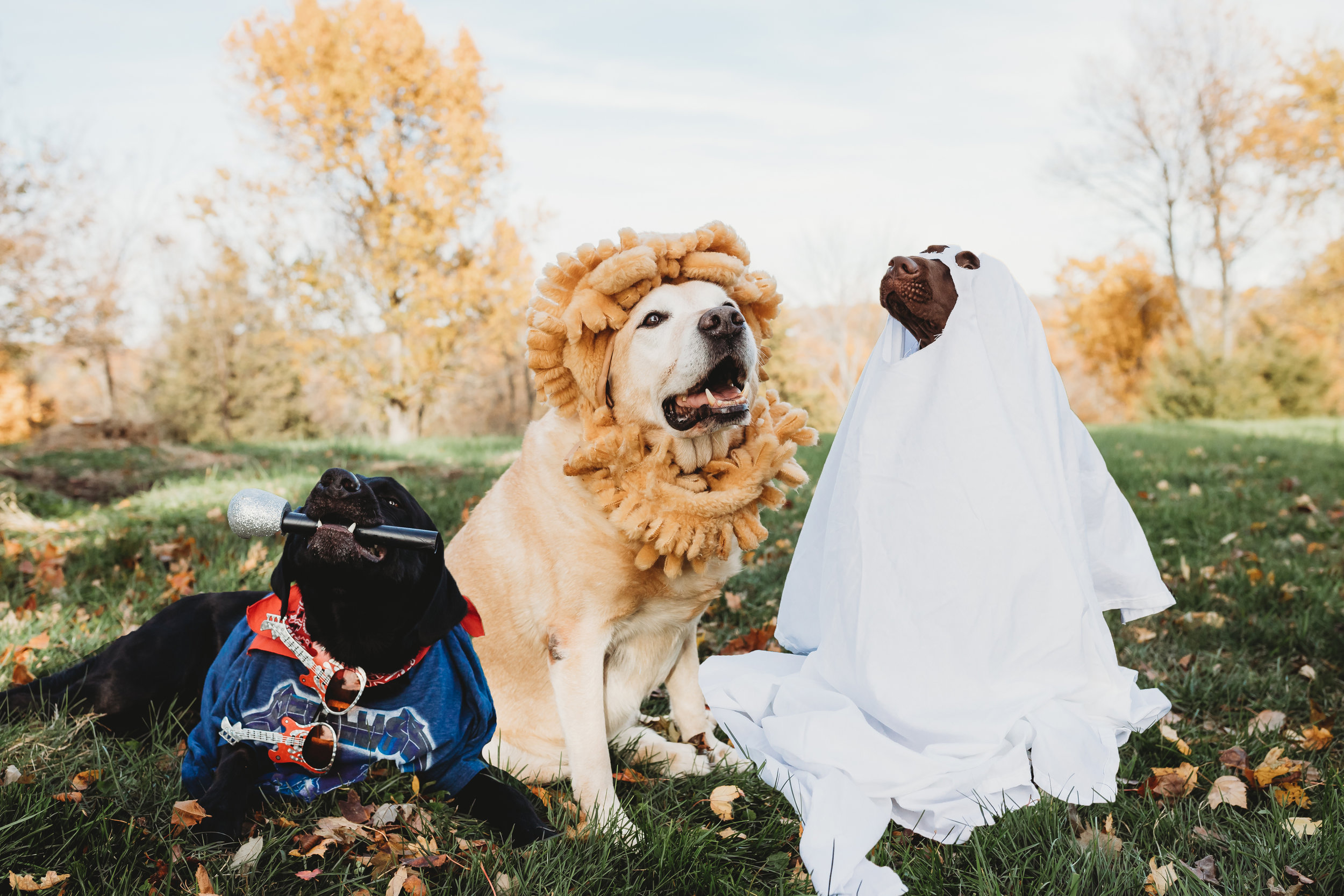 My Boys - These 3 have stolen my heart, my fur babes. Bear Bryant, Charlie Brown, and Riggins Lee. You don't have to ask twice about bringing your fur babes to a session!