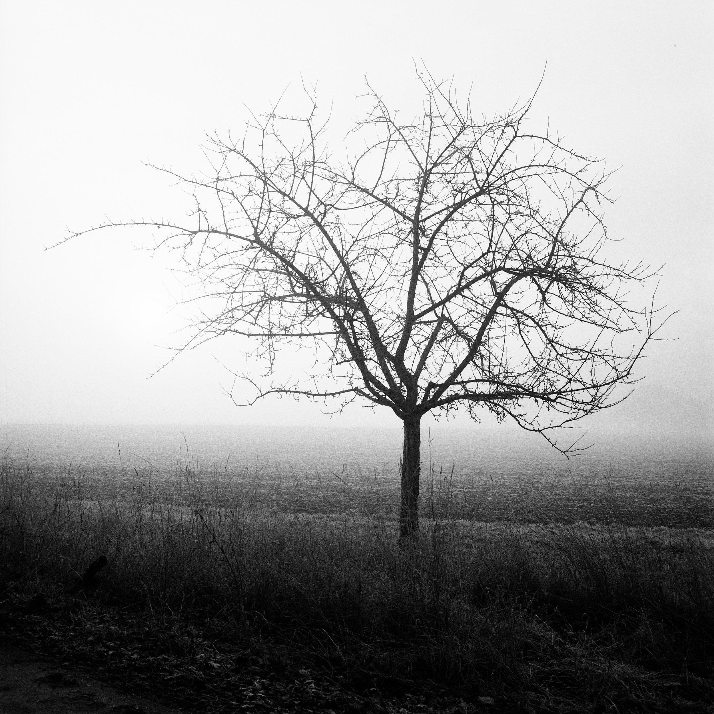 The Odd Branch