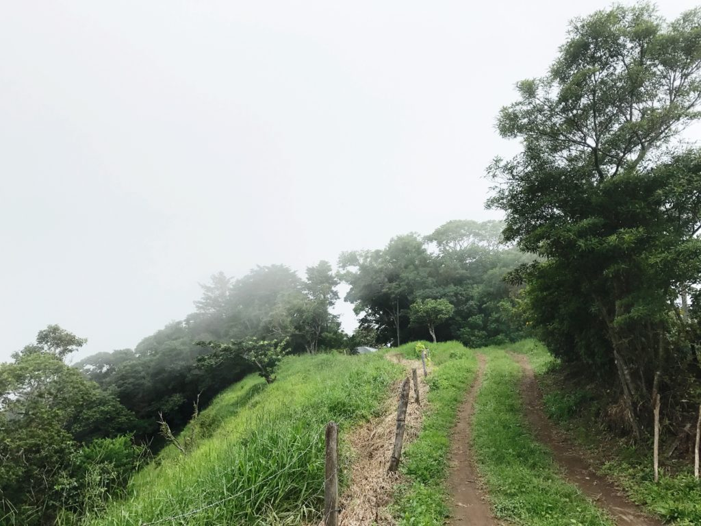 Entering the Cloud Forest