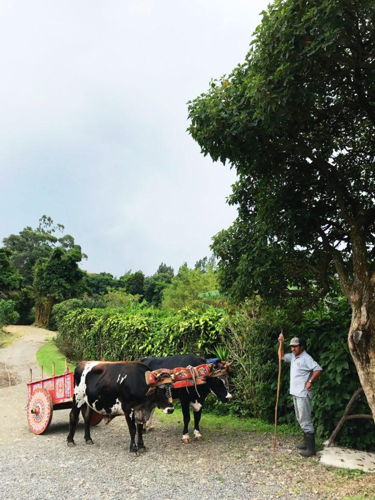 Don Juan Coffee Farm