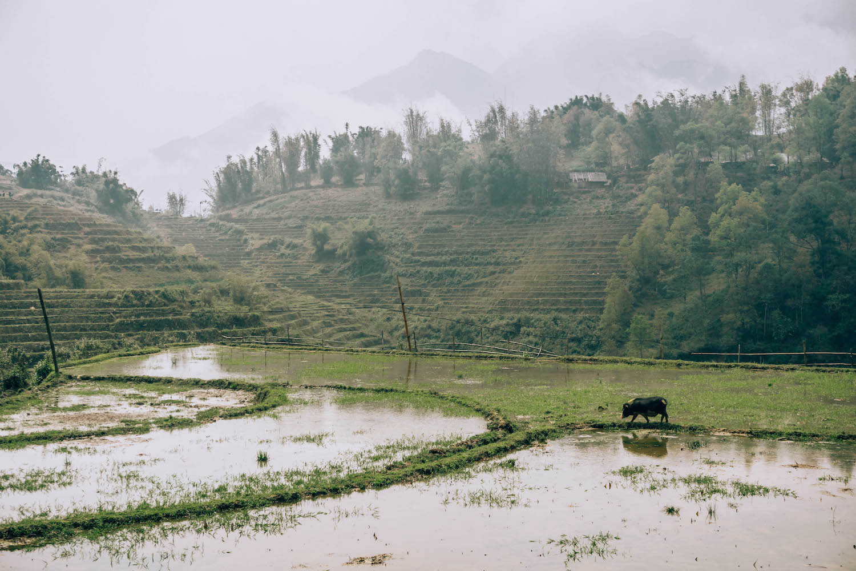 sapa-vietnam-trek-15.jpg