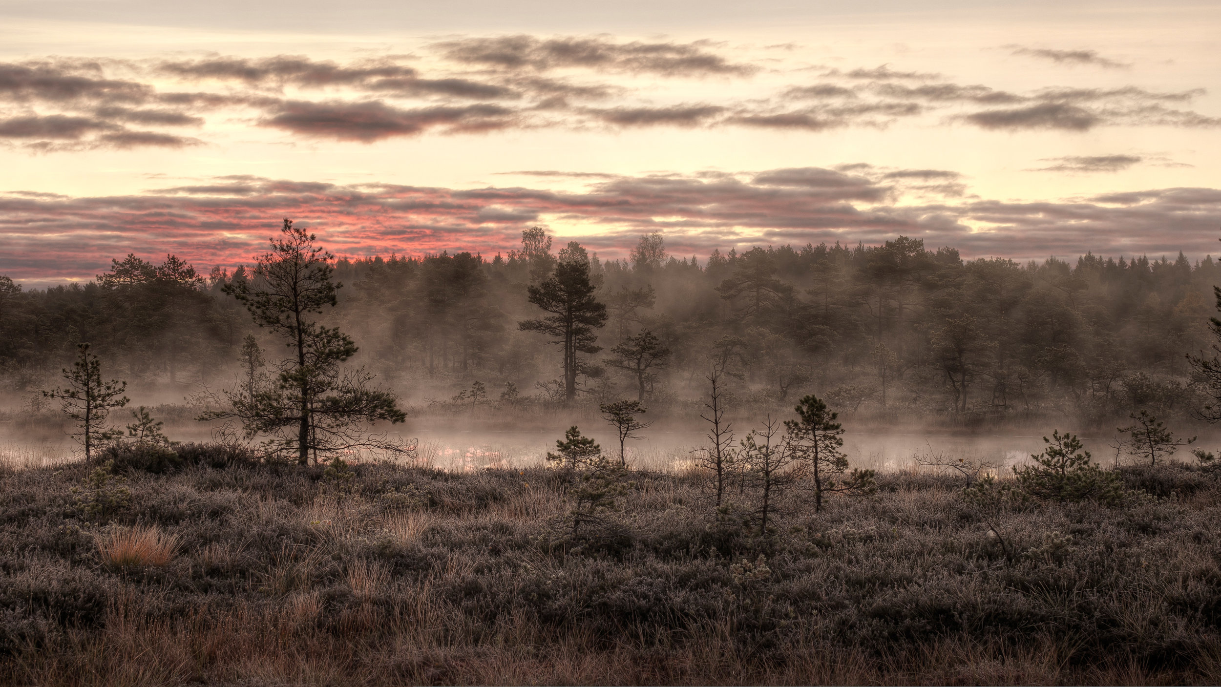 This image is licensed under the  Creative Commons   Attribution-ShareAlike 3.0 Estonia  license.  Mukri bog in the october morning mist by Amadvr