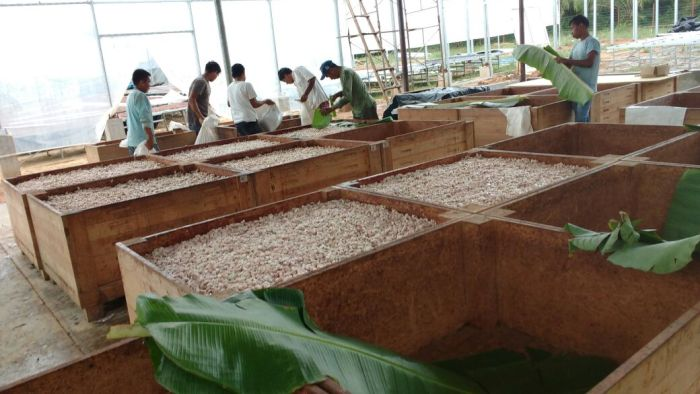Image from  Ucayali River Cacao . Box Fermentation.