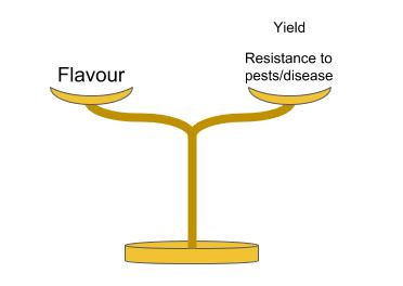 Figure 2: Balancing the important factors when propagating fine flavour cacao (Illustrated by Geoseph Domenichiello).