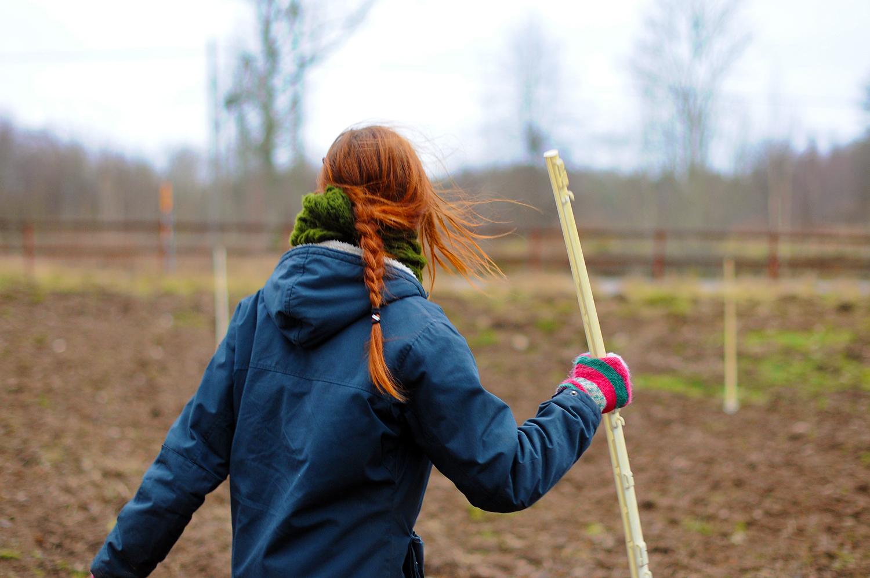 Mäter ut odlingsytan - på snittblomsåkern