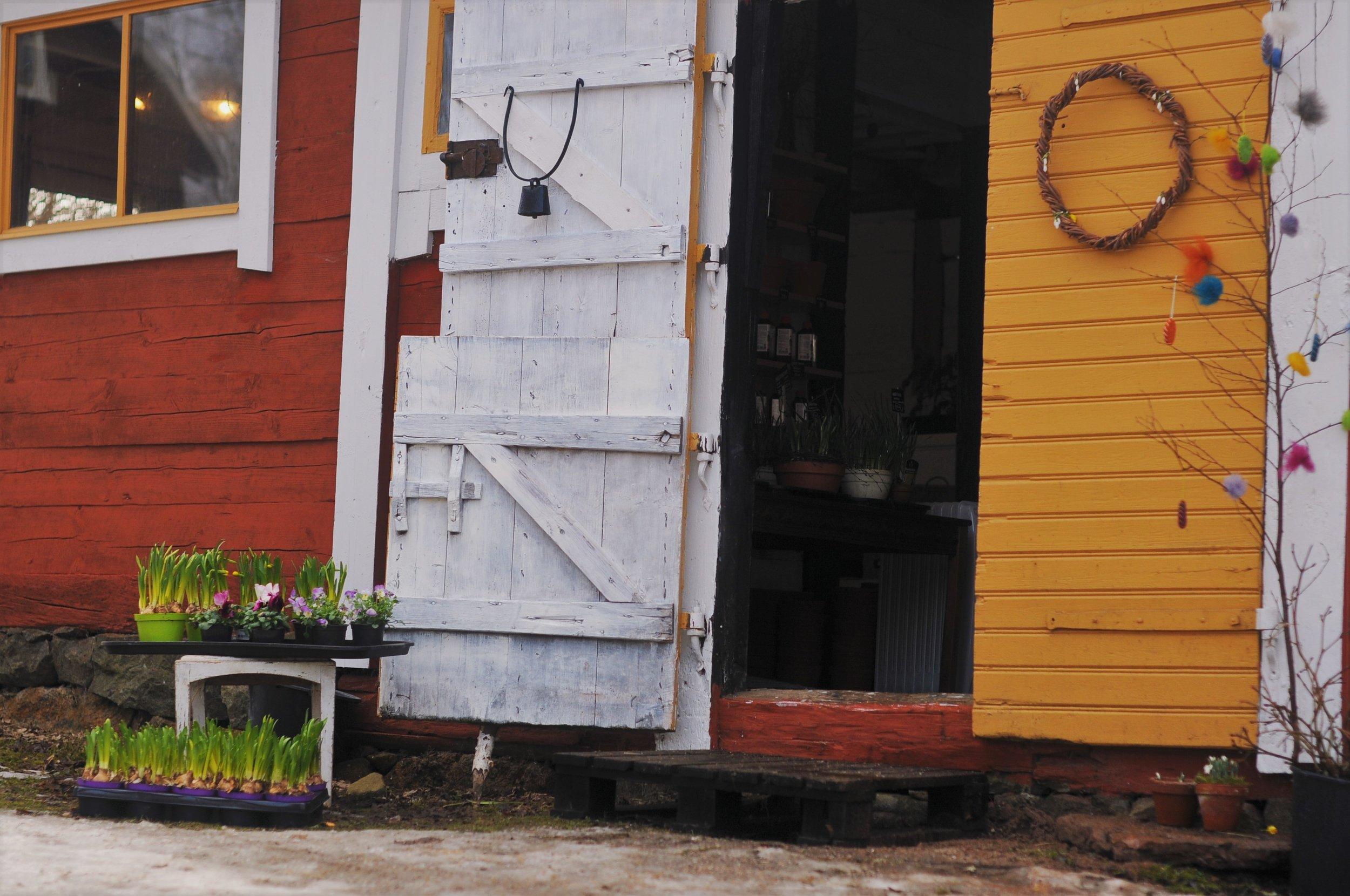 Fiddekulla Trädgårds butik! Lantligt och gediget. Koskällan är väldigt gammal och kommer från min morfars far som hade en ko när han bodde i vissefjärda. Den här koskällan har hängt på en vägg i skara i kanske 60 år men är nu 'hemma' i Vissefjärda igen!Den fungerar idag som dörrklocka i trädgårdsbutiken!