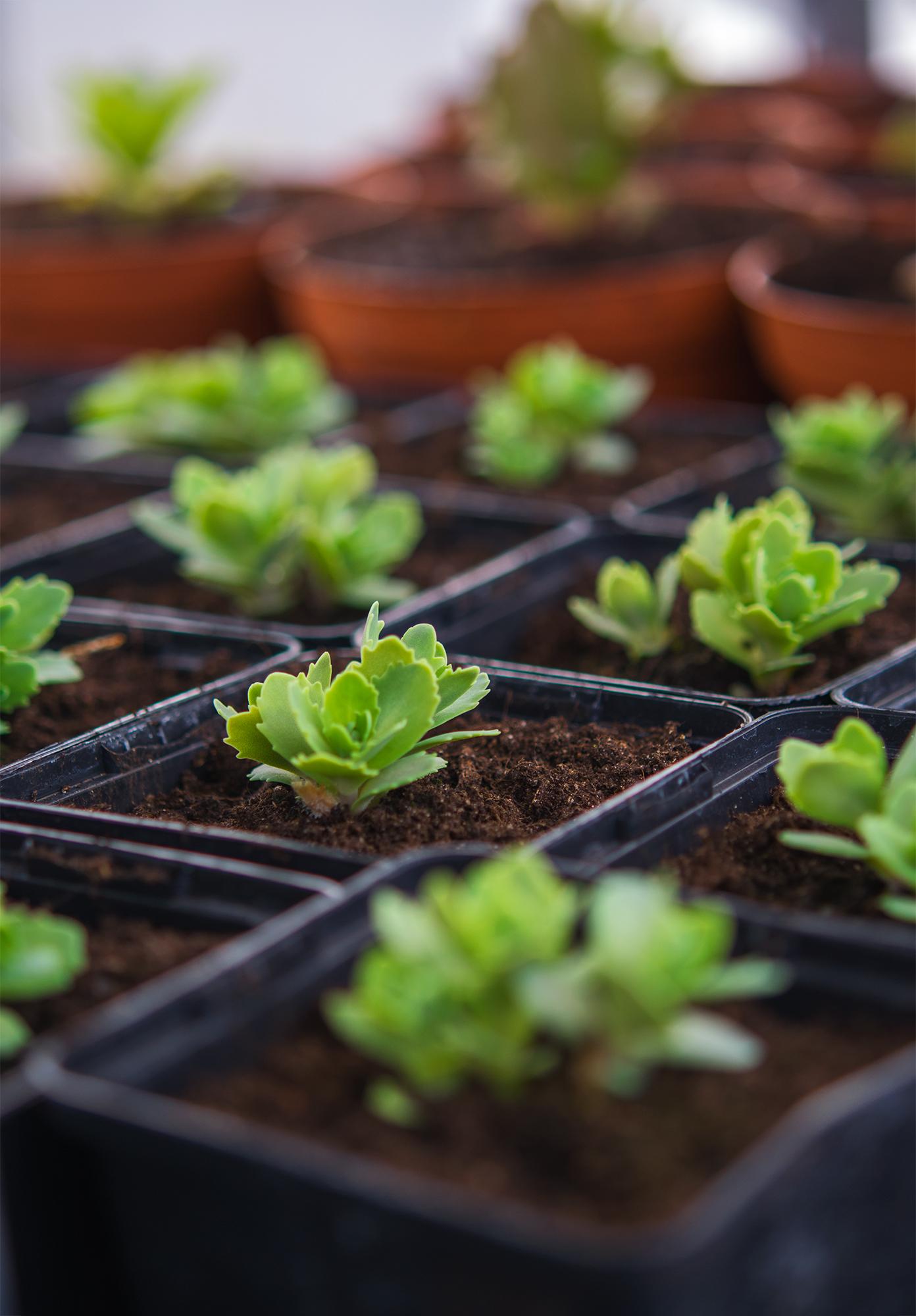 Plantor som tål att planteras ut nu