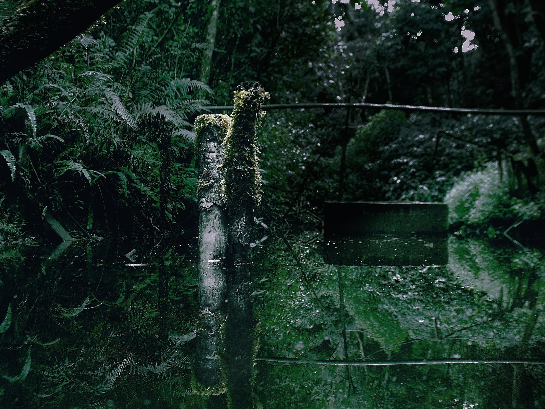 vegangrouptriptorainforest