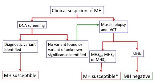 MHDiagnosisPathway.jpg