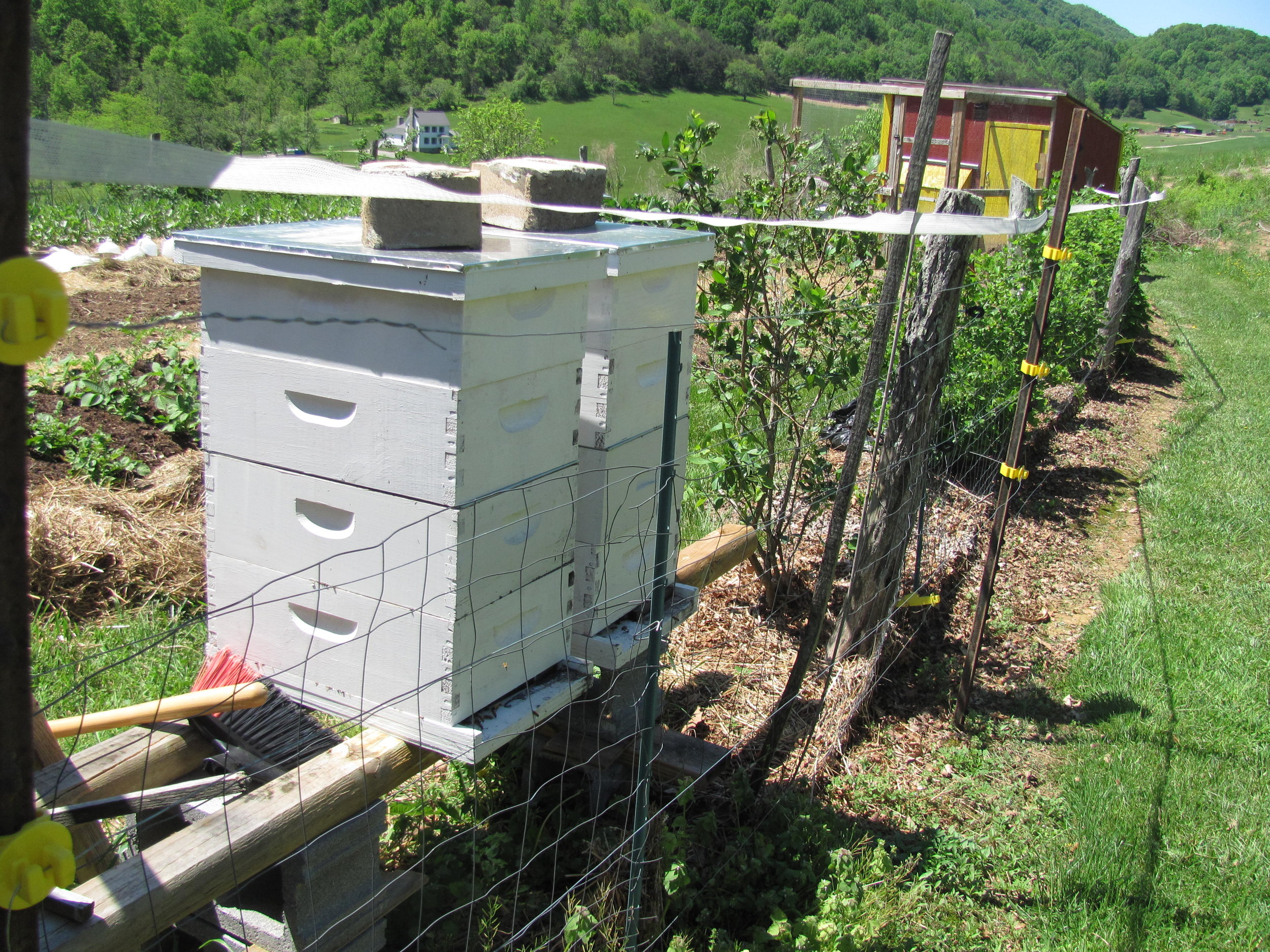 Two of the hives on the edge the garden