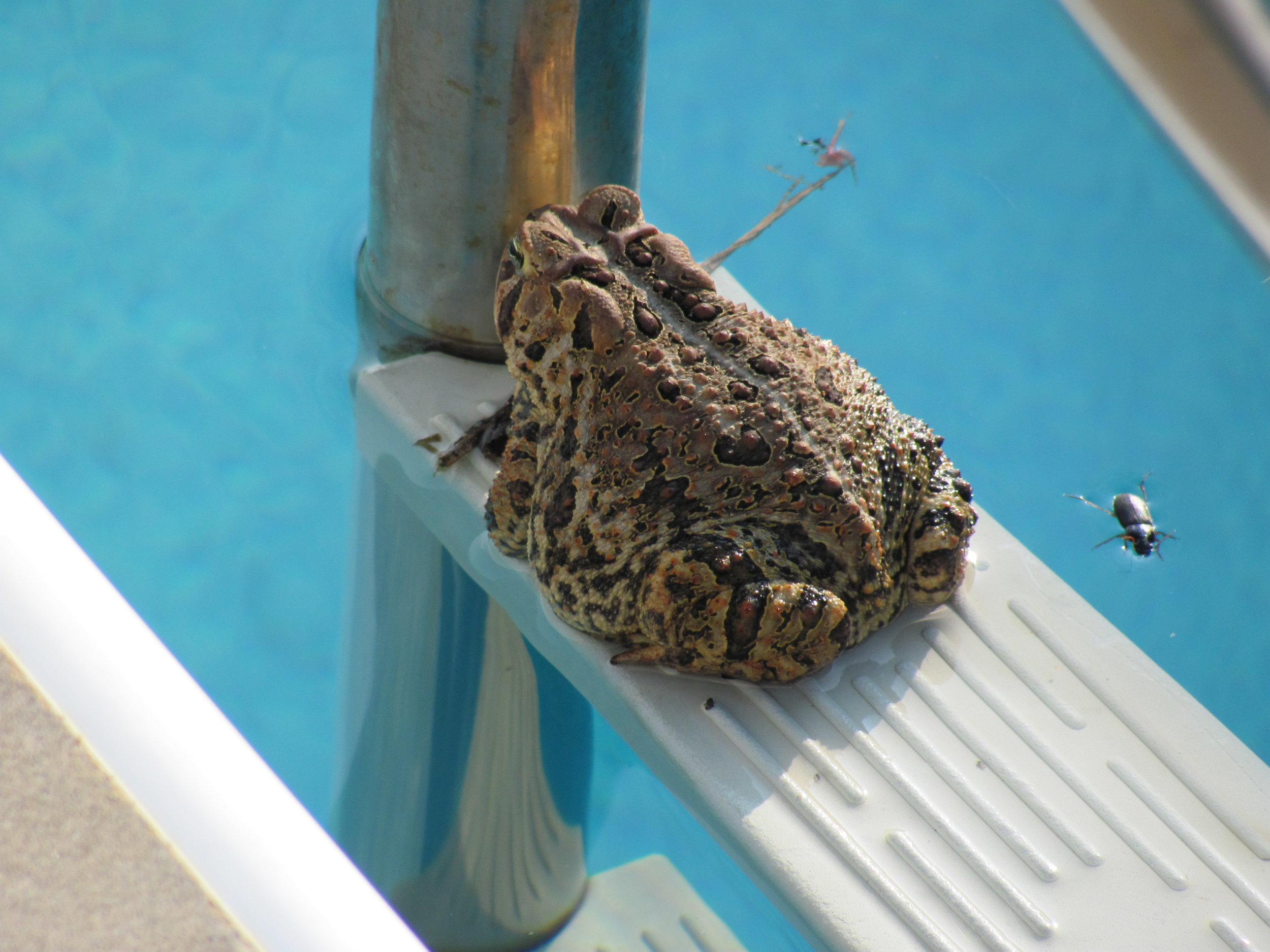 Our pool gets lots of intersting visitors!