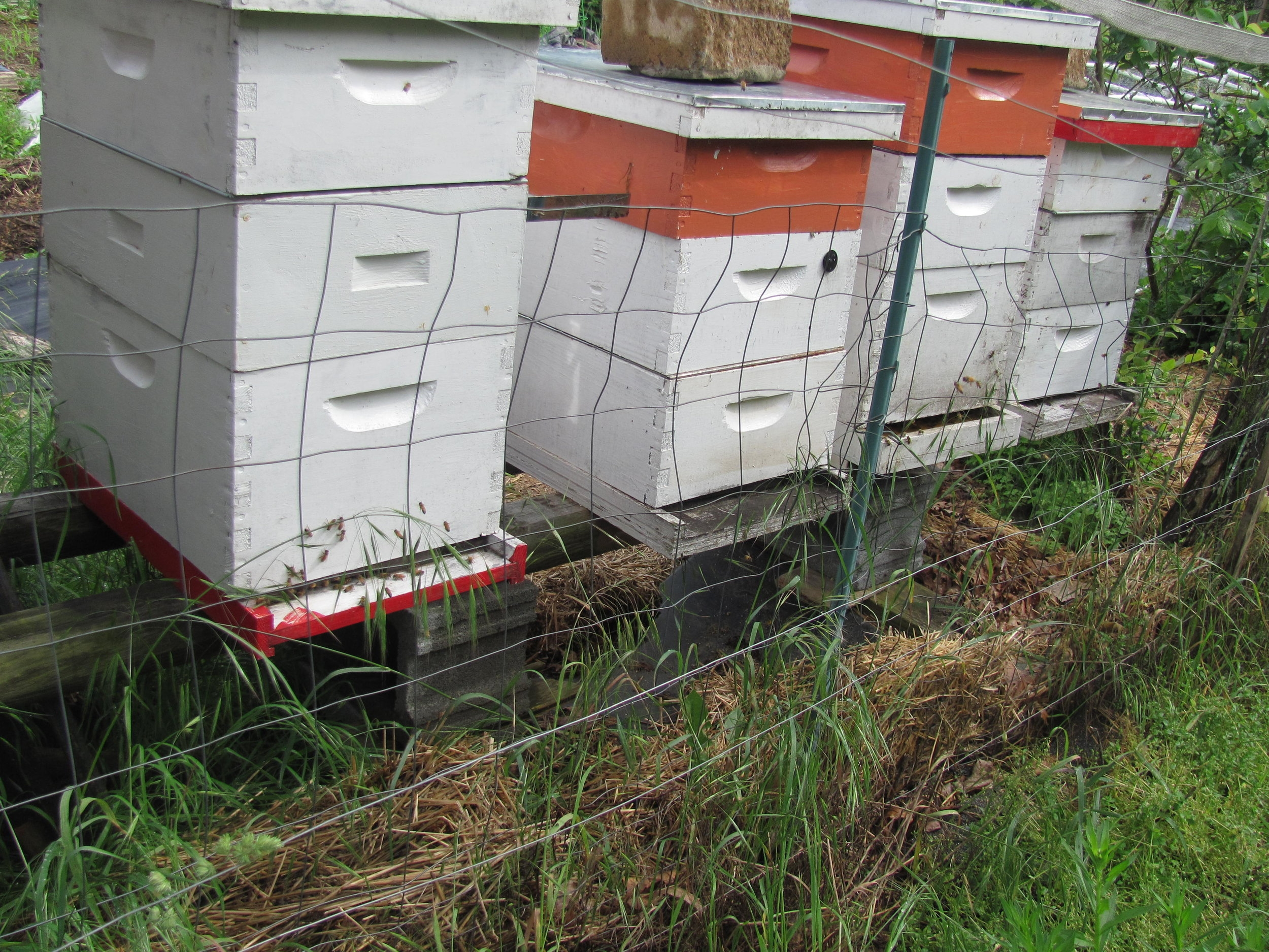 Rebuilding the apiary after the devastation of the winter 2017-18.