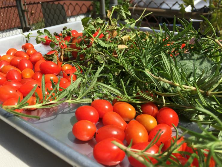 K. Martinelli Blog _ Kristen Martinelli Writer & Marketer_Easy Summer Tortellini Salad (1).png