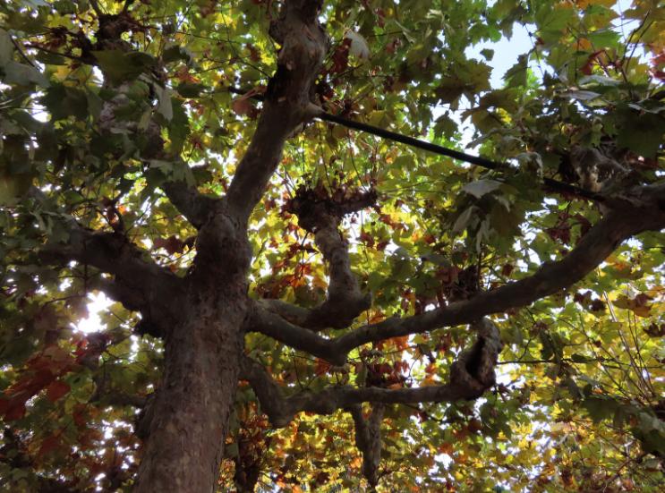 Panini & Vini_ Giardino delle Rose_Tree_Florence Italy_K.Martinelli Blog _ Kristen Martinelli.png
