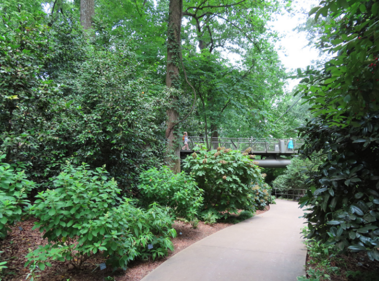 Atlanta Botanical Garden_Atlanta Georgia_Pathway_K. Martinelli Blog _ Kristen Martinelli.png