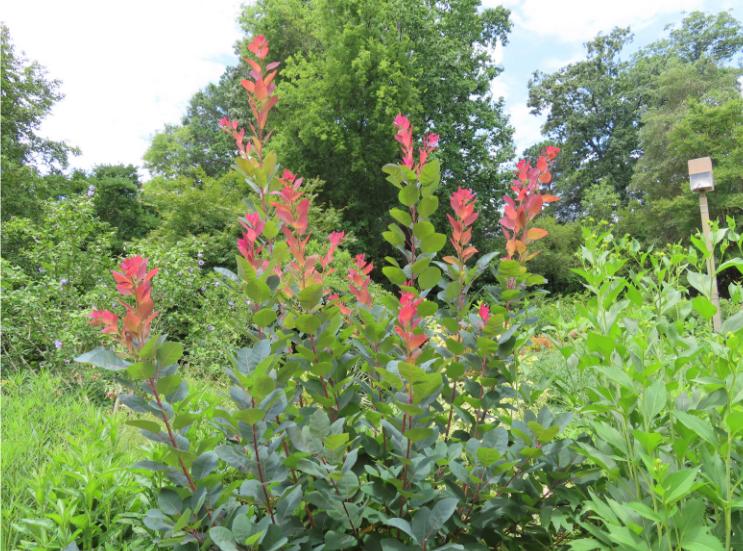 Atlanta Botanical Garden_Atlanta Georgia_Pink_K. Martinelli Blog _ Kristen Martinelli.png