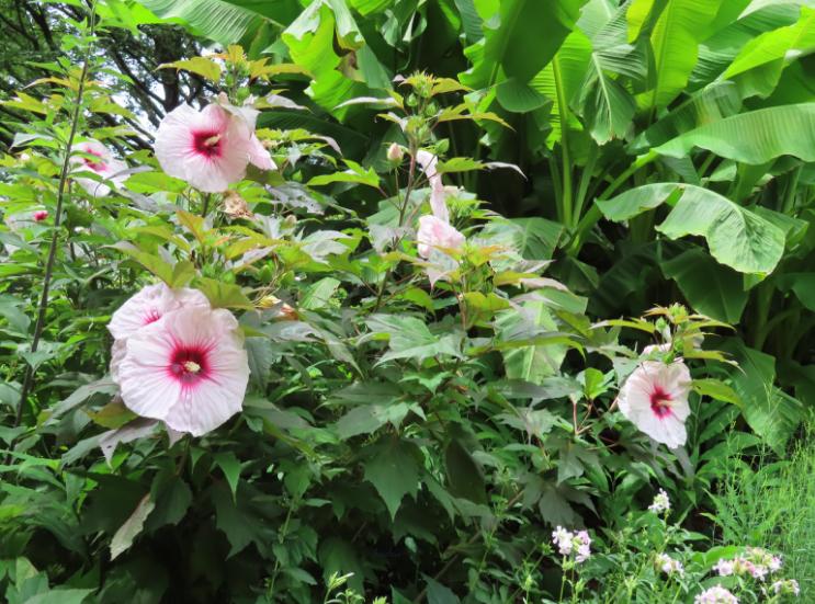 Atlanta Botanical Garden_Atlanta Georgia_Tropical_K. Martinelli Blog _ Kristen Martinelli.png