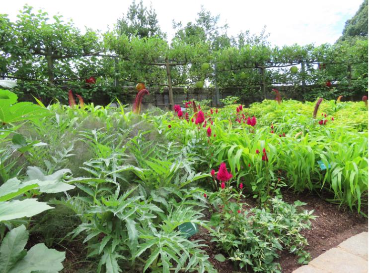 Atlanta Botanical Garden_Atlanta Georgia_Donated_K. Martinelli Blog _ Kristen Martinelli.png