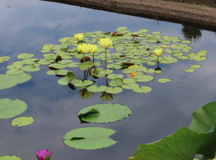 Atlanta Botanical Garden_Atlanta Georgia_Ponds_K. Martinelli Blog _ Kristen Martinelli.png