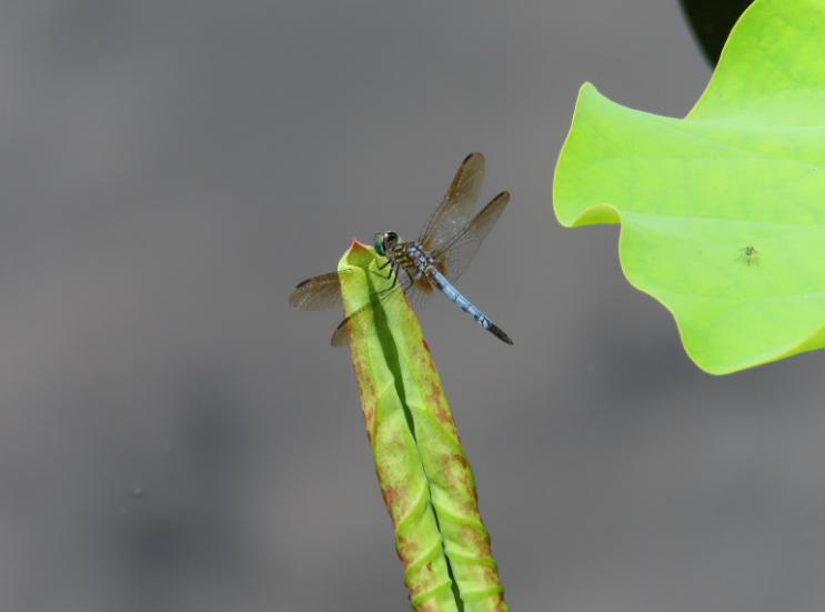 Atlanta Botanical Garden_Atlanta Georgia_Dragonfly_K. Martinelli Blog _ Kristen Martinelli.png