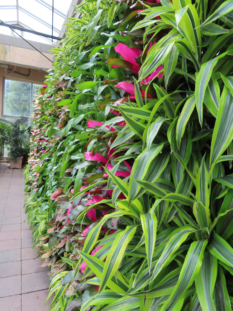 Atlanta Botanical Garden_Atlanta Georgia_Greenhouse_K. Martinelli Blog _ Kristen Martinelli.png