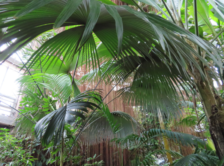 Atlanta Botanical Garden_Atlanta Georgia_Indoor Palms_K. Martinelli Blog _ Kristen Martinelli.png