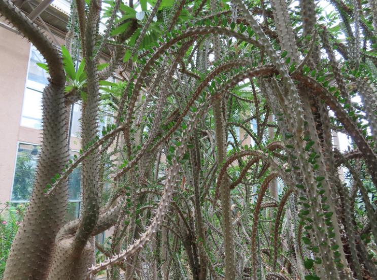 Atlanta Botanical Garden_Atlanta Georgia_Desert Plants_K. Martinelli Blog _ Kristen Martinelli.png
