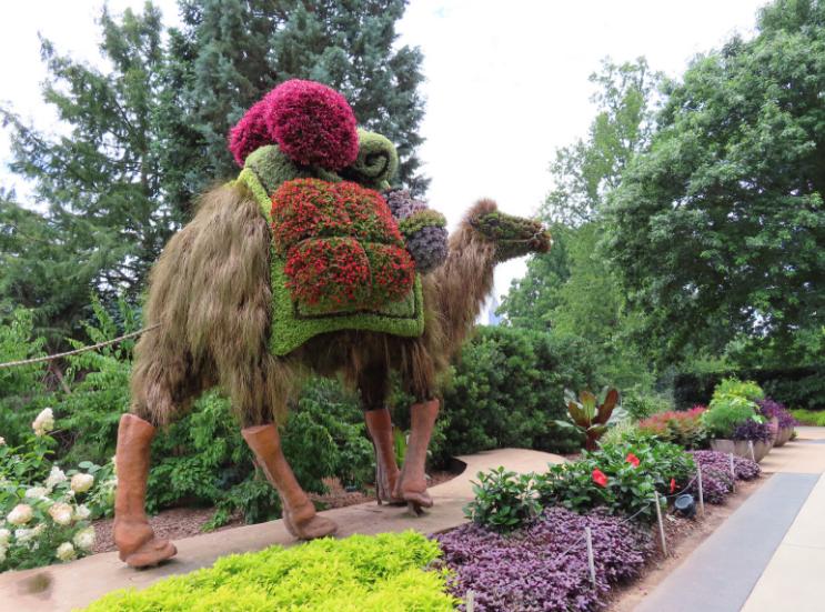 Atlanta Botanical Garden_Atlanta Georgia_Camel 2_K. Martinelli Blog _ Kristen Martinelli.png