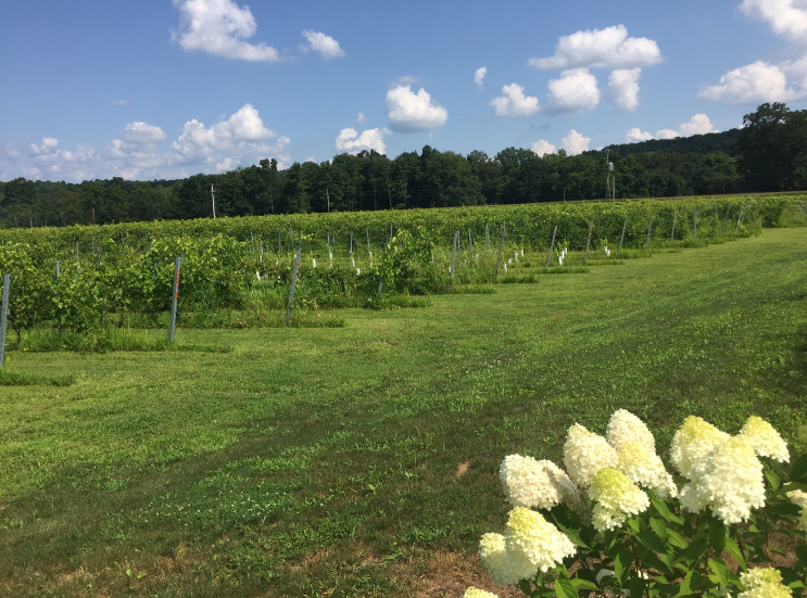 2019 Brook Hollow Winery Clam Bake_Property-Columbia NJ _ K.Martinelli Blog_Kristen Martinelli.png