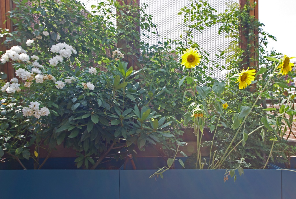 small_ROOF TERRACE 02 - VIEW 05.jpg