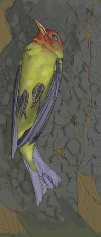 Dead Bird_1.jpg