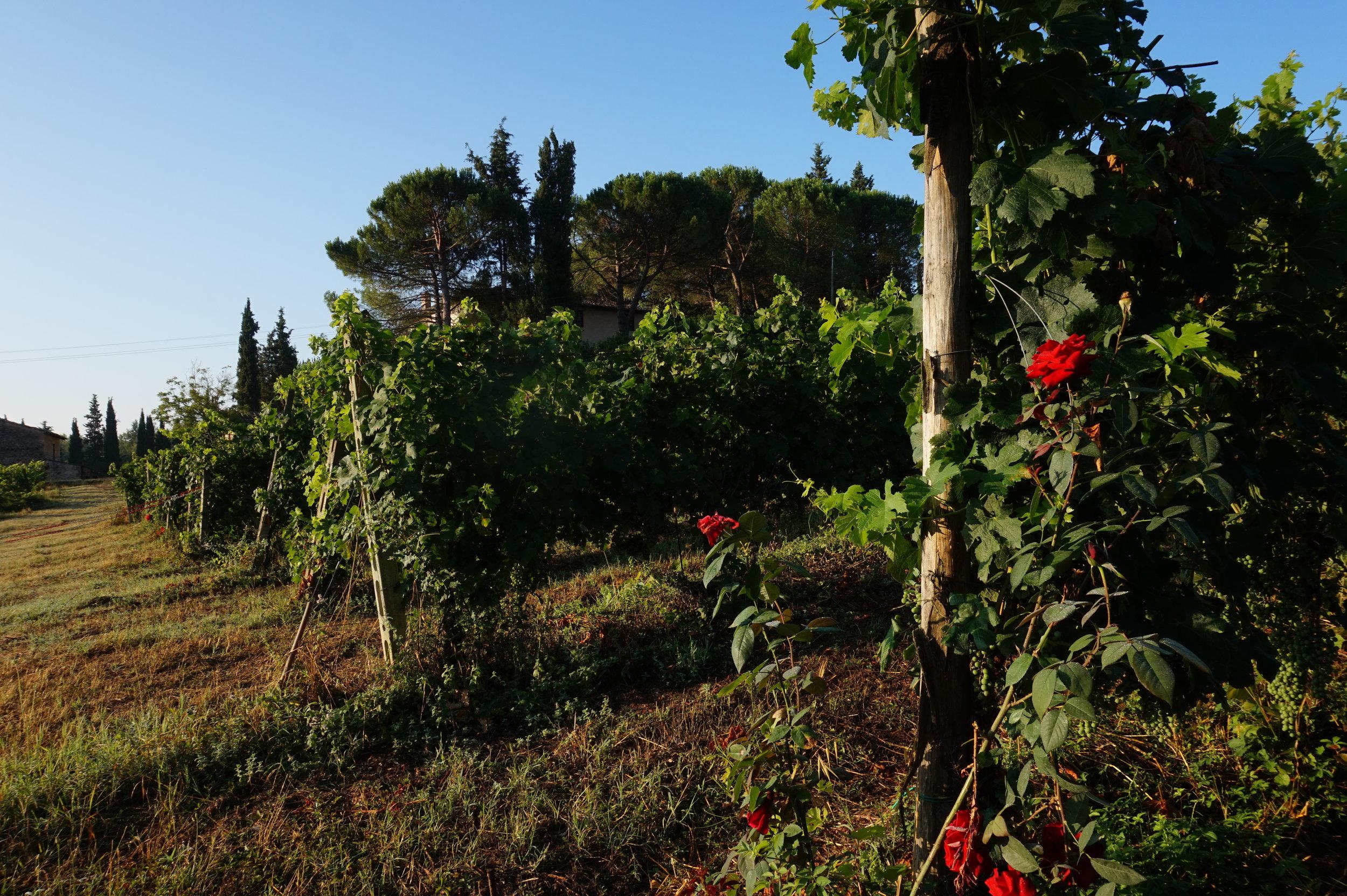 Hike San Gimignano