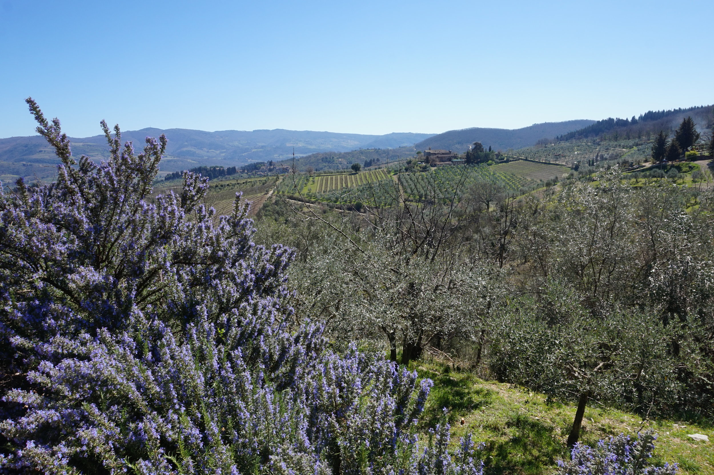 Walk in Tuscany, Hiking Tours in Chianti