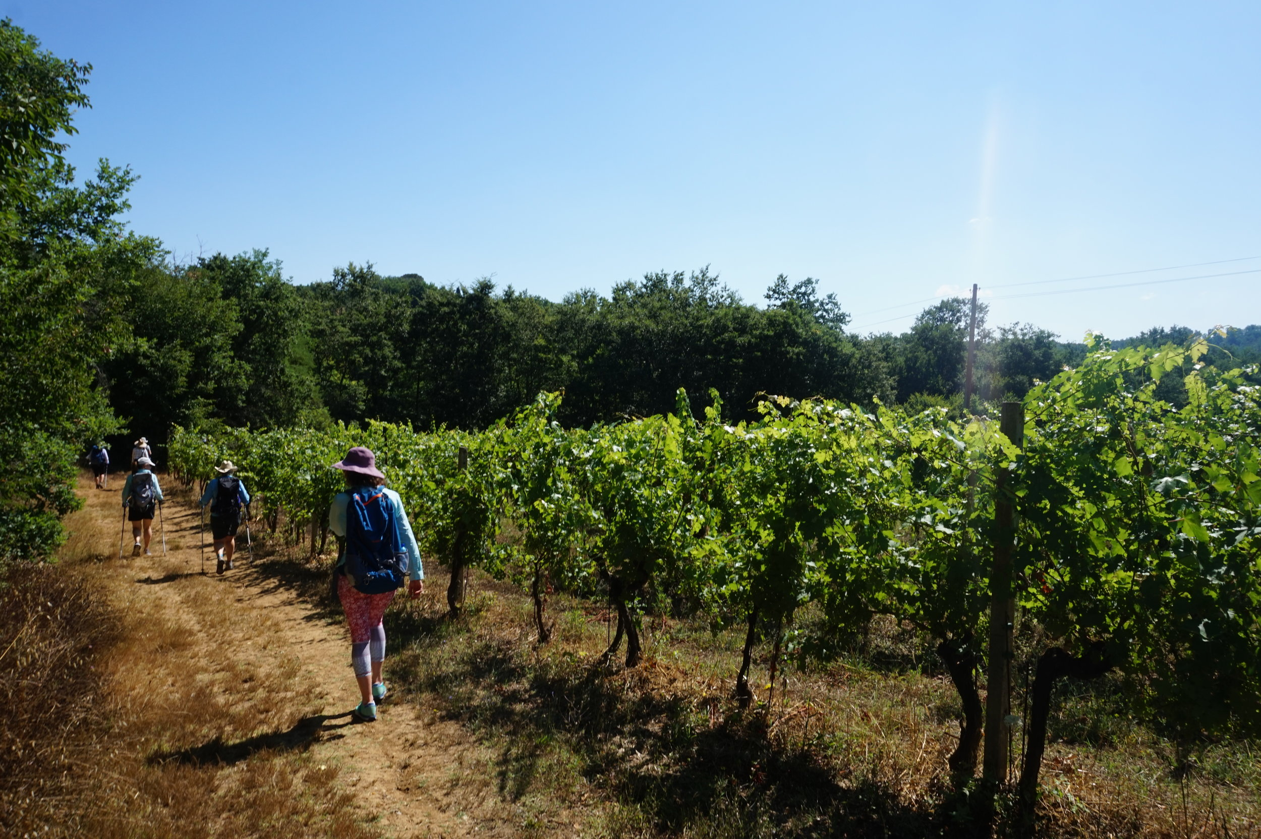 Hiking Tours Via Francigena in Tuscany