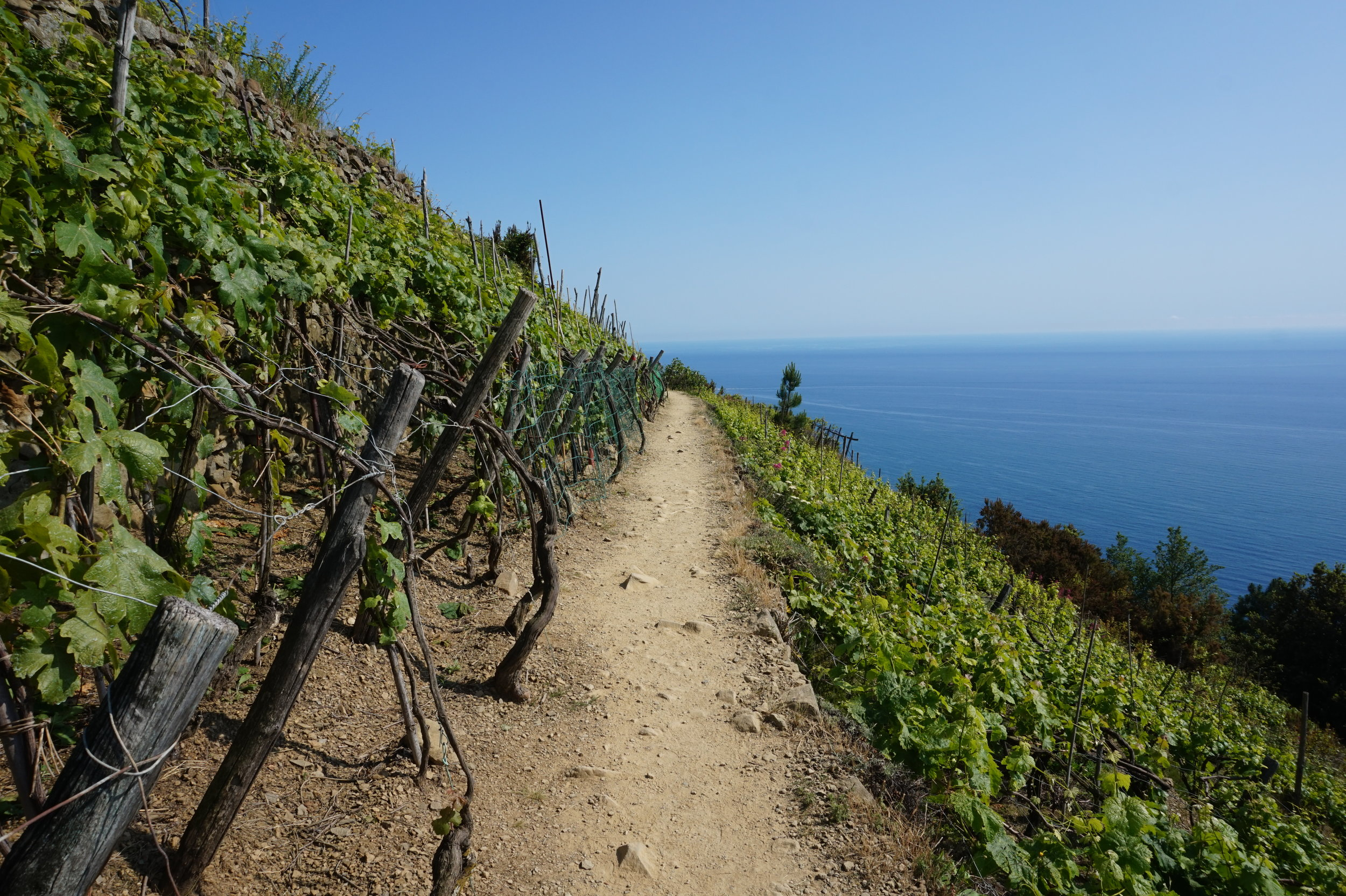 Hiking Tours in the Cinque Terre