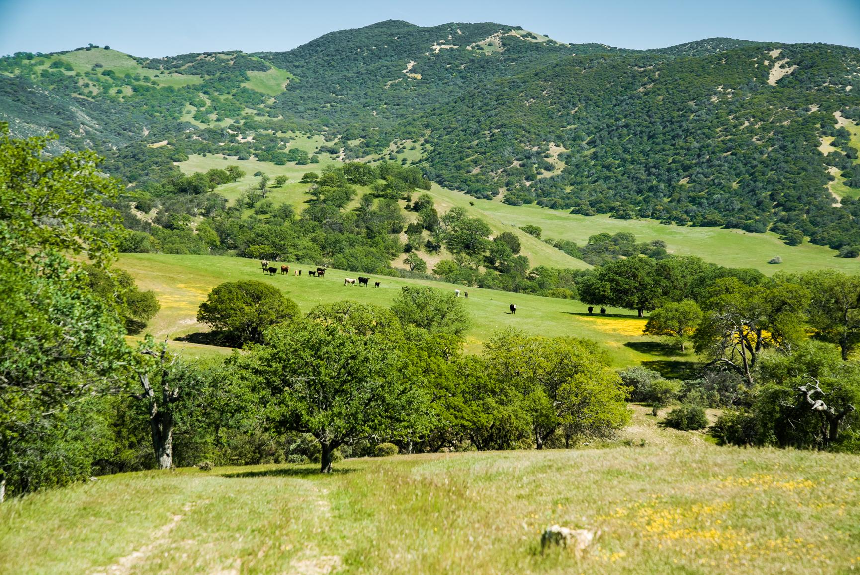 basin ranch.jpg
